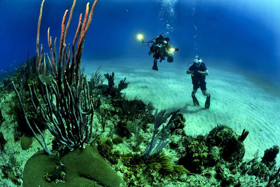 dive guadeloupe