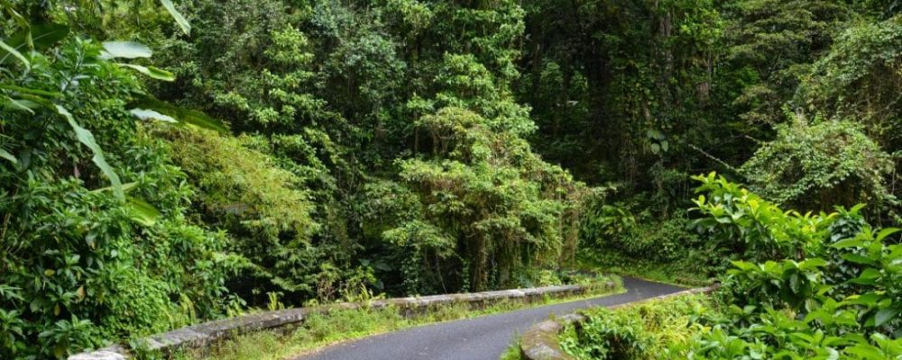 Scenic Road Trip Through The Rain Forest