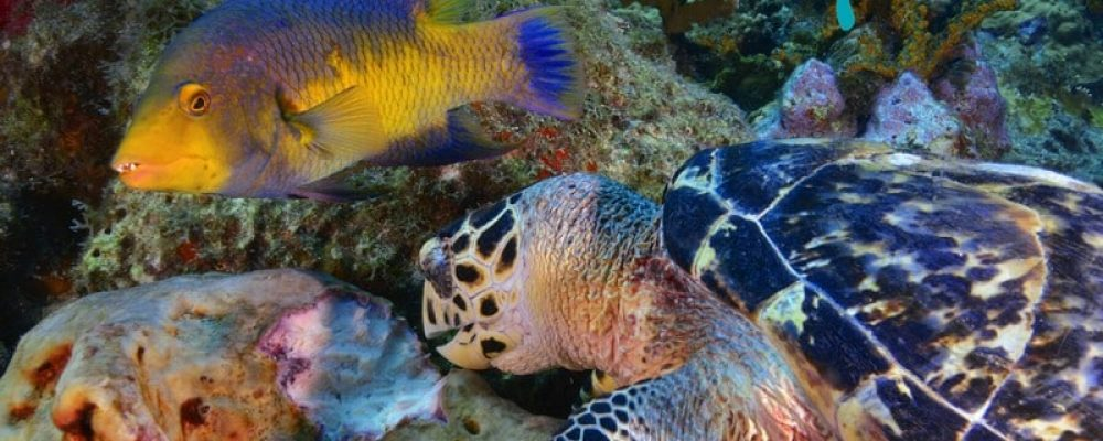 Diving In Guadeloupe National Park & Reserve
