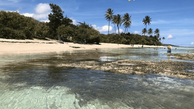The Beach Of Grande-Anse Is Ranked Among The 25 Most Beautiful Beaches Of The Caribbean