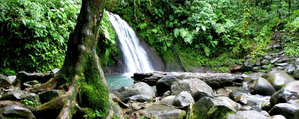 Best Tips On Discovering The National Park Of Guadeloupe